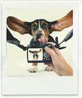 dog_photo